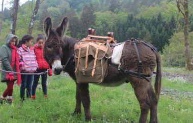 Baudet d'âne-Equitation à Province du Luxembourg