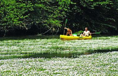 Kayaks de l'Embarcadère-Kayak à Province du Luxembourg