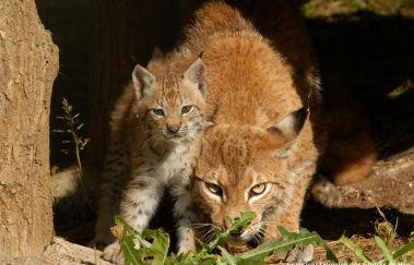 La Réserve d'Animaux Sauvages - Domaine des Grottes de Han-Parcs-animaliers à Province de Namur
