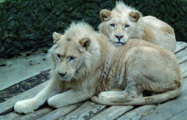 Parc animalier de Bouillon-Parcs-animaliers à Province du Luxembourg