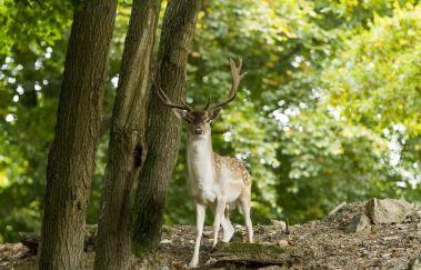 Wild Park Coo-Parcs-animaliers à Province de Liège