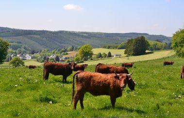 Ennal-Ville à Province du Luxembourg